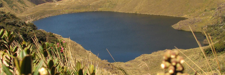Huaringas